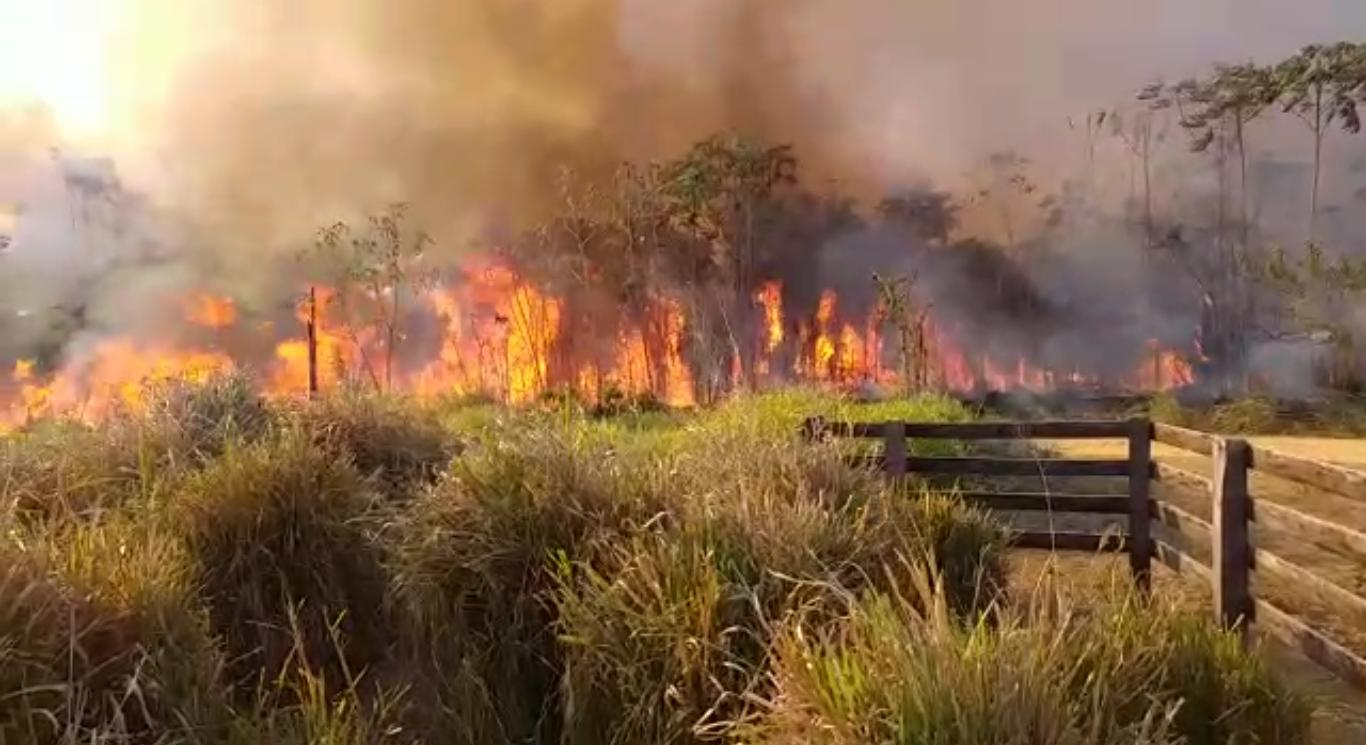 Resultado de imagem para Grileiros promovem derrubadas e queimadas na divisa de São Félix com Altamira